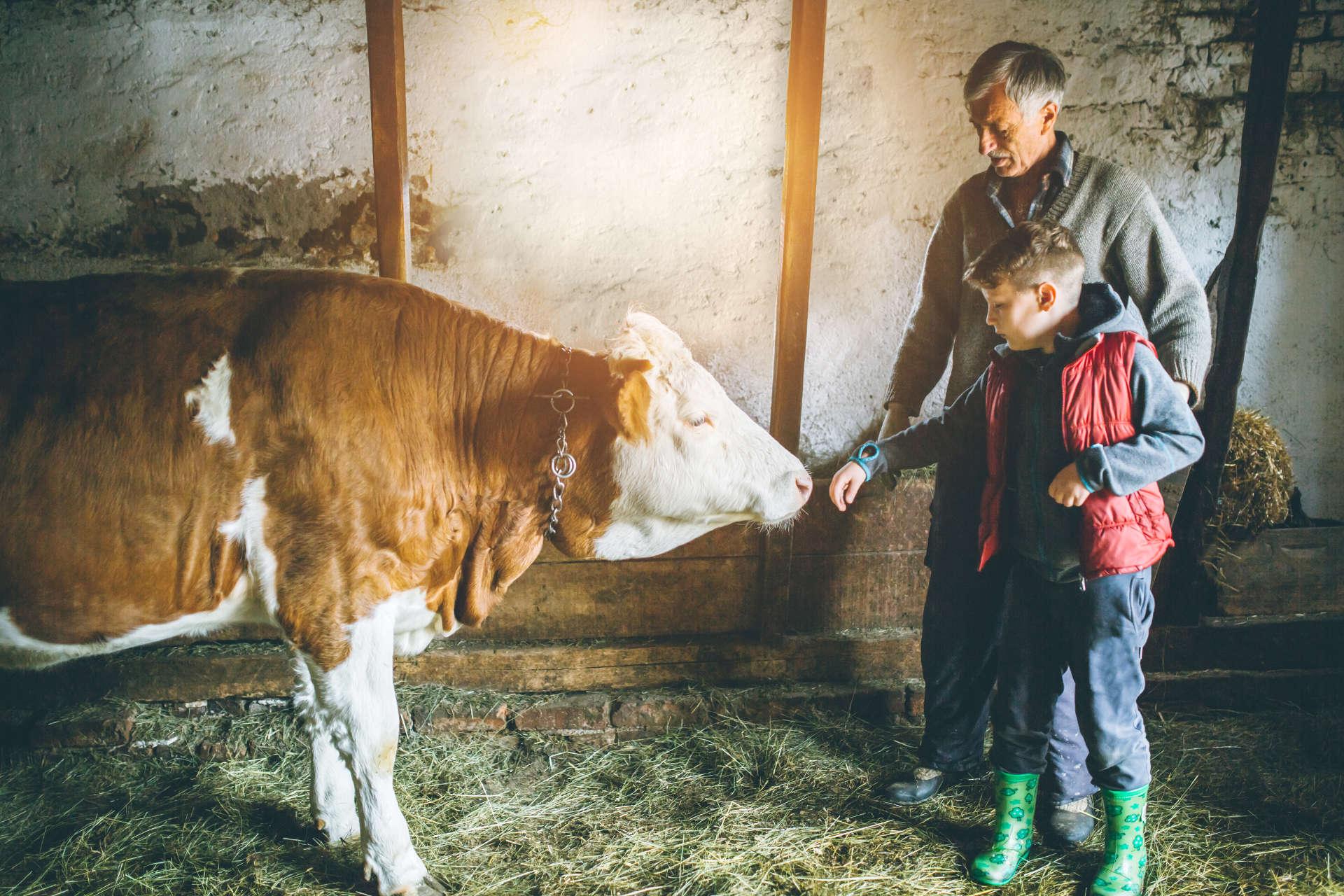 Générations d'éleveurs