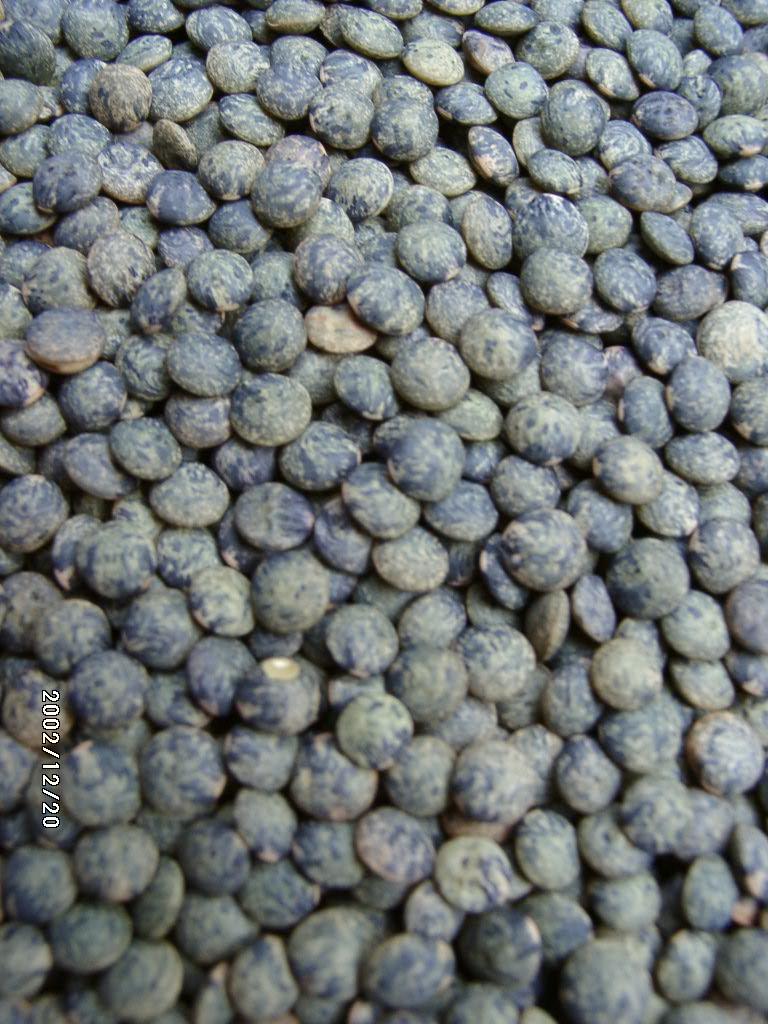 Lentilles - graines
